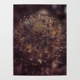 Dead Flower Poster