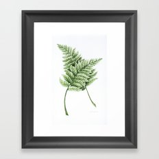 Two Ferns Framed Art Print