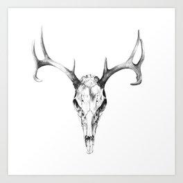 Deer Skull in Pencil Art Print
