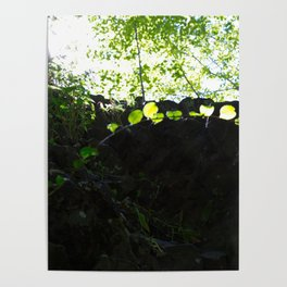 Sun through the trees in the woods Poster