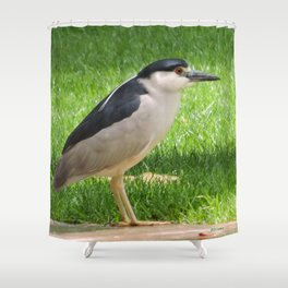 Black Crowned Night Heron in the Park Shower Curtain