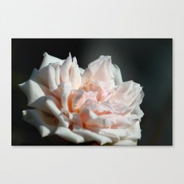 Hollywood Flower II  Canvas Print