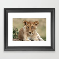 Lion Portrait  Framed Art Print