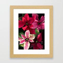 Colorful Christmas Poinsettias, Scanography Framed Art Print