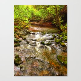 Motion in Muir Woods Canvas Print