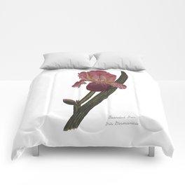 Bearded Iris: Iris Germanica Comforters