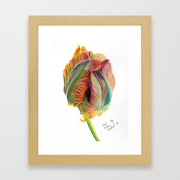 Tulip in Coloured Pencil Framed Art Print