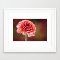 persian Framed Art Prints featuring Persian Buttercup by ThePhotoGuyDarren