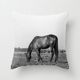 Black Horse Grazing w/ Geese Throw Pillow