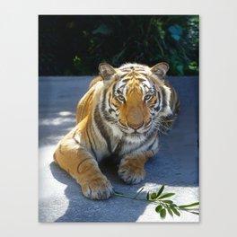 Tiger Face Canvas Print