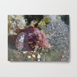 Decorative scorpionfish Metal Print
