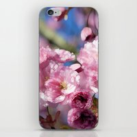 cherry blossoms iPhone & iPod Skins featuring Cherry Blossoms by Joke Vermeer