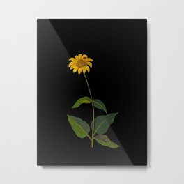 Rudbeckia Trifoliata Mary Delany British Botanical Paper Flower Collage Delicate Flowers Metal Print