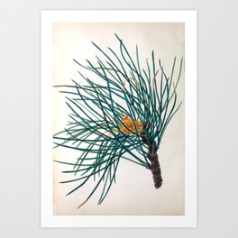 """The Stone Pine, from """"The Spirit of the Woods,"""" 1849 (benefiting the Arbor Day Foundation) Art Print"""