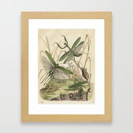 Grasshopper & Mantis Framed Art Print