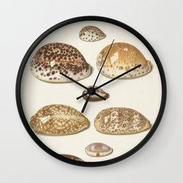 Vintage Seashell Chart II Wall Clock
