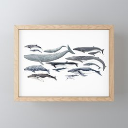 Whale diversity Framed Mini Art Print