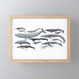 Whale diversity Framed Mini Art Print