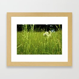 Wild White and Free Framed Art Print