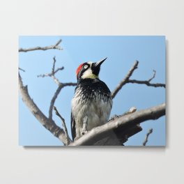 Woodpecker Lookup Metal Print