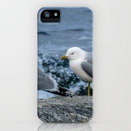 Seagulls, Norway iPhone Case