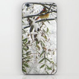 Winter Snow Cardinals iPhone Skin