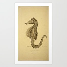 Vintage Print - Arcana or The Museum of Natural History (1811) - Hippocampus / Seahorse Art Print