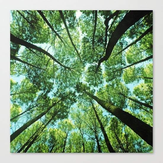 Looking up in Woods Canvas Print