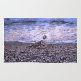 Seagull and sunset Rug