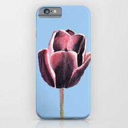 Red violet single tulip iPhone Case