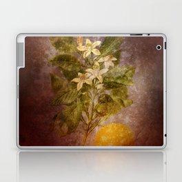 Vintage Fruit Laptop & iPad Skin