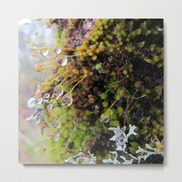 Rainforest No.4 Metal Print