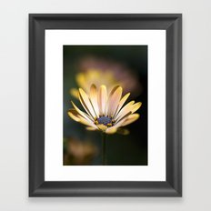 daisies in a row. Framed Art Print