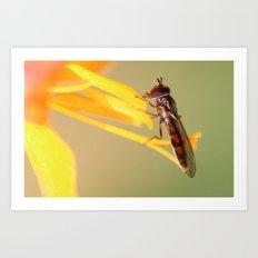 Mr Bug Art Print