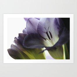 Freesia flowers Art Print