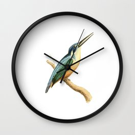 Half-collared Kingsfisher Bird Illustration by William Swainson Wall Clock