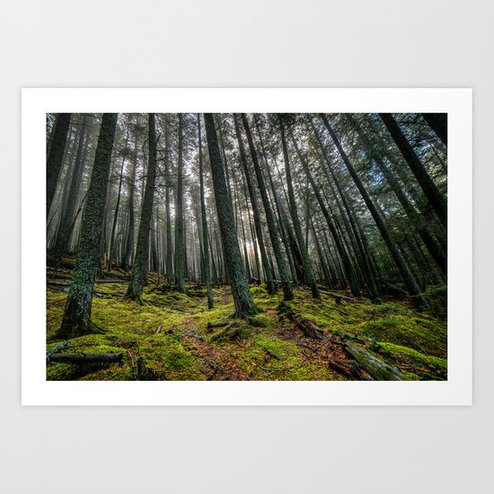 Escape Into The Woods Art Print