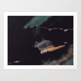 aloe bark Art Print