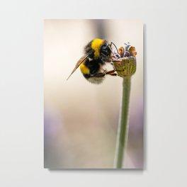 Flower Bee Metal Print