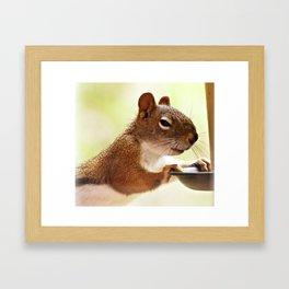 Devious Squirrel Framed Art Print