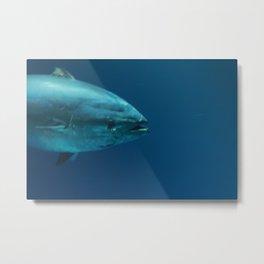 Bluefin Metal Print