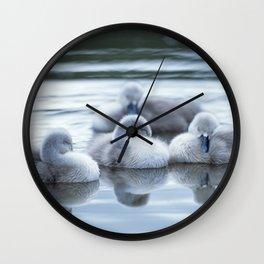 MUTE SWAN CYGNETS Wall Clock