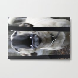 Barking Metal Print