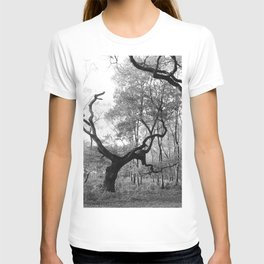 Withered Oaks in Black & White T-shirt