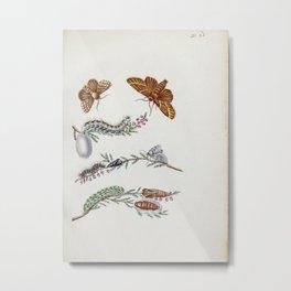 Flower erice florens62 Metal Print