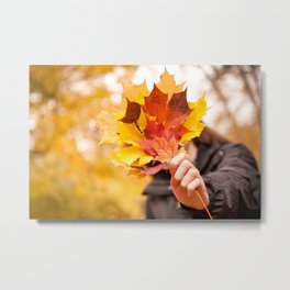 Acer autumn bunch yellow red leaves Metal Print
