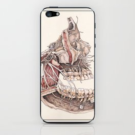 Anatomical Study of the Human Face iPhone Skin