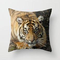 Tiger 2014-1001 Throw Pillow