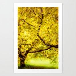 Arboretum Trees Art Print