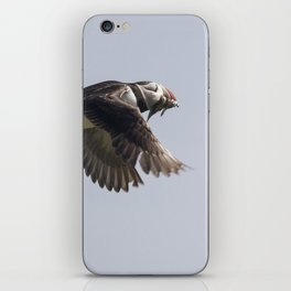 Atlantic puffin in flight with her sand eels iPhone Skin